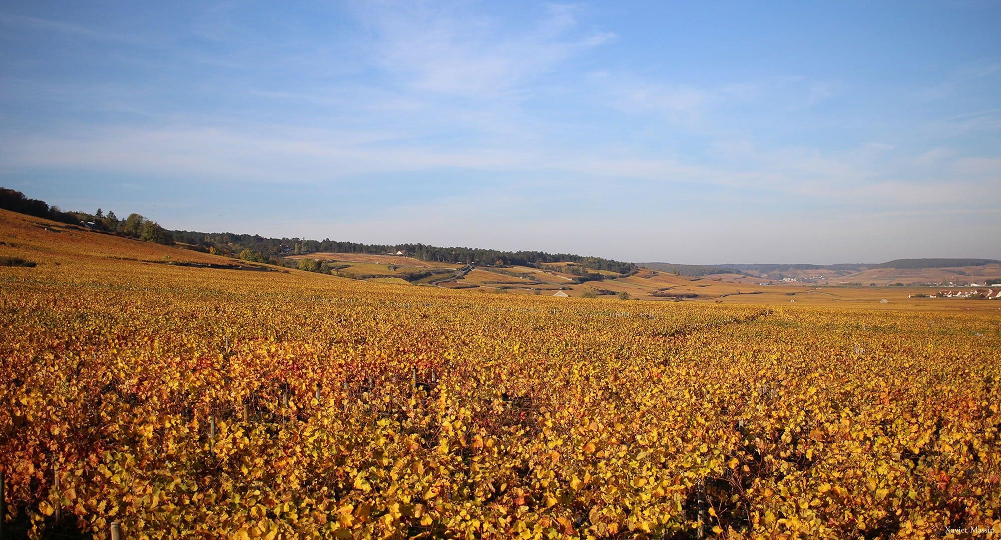 séjour vignoble Bourgogne