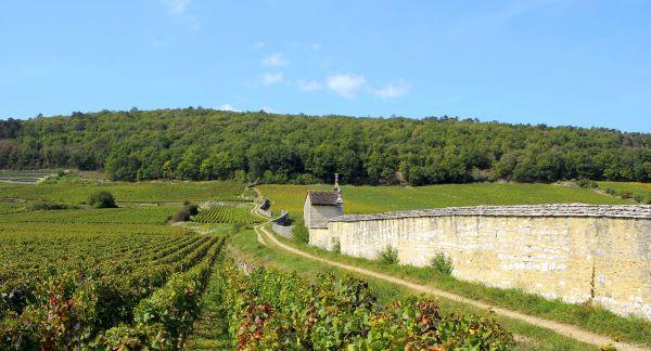 Route des vins chateau de gilly